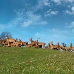 Rongrino-Allevamento-di-cervi