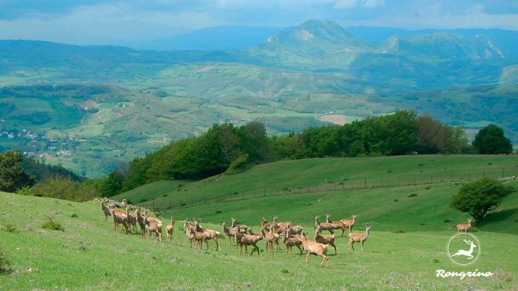 Allevamento-cervi-Val-di-Sambro