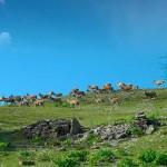 Allevamento-cervi-daini-e-mufloni