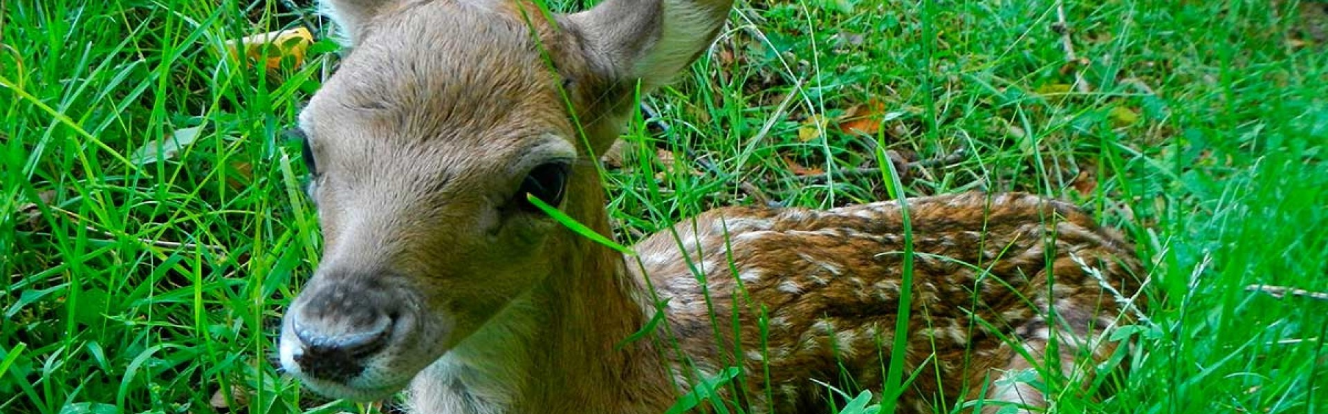 Allevamento di cervi | Rongrino